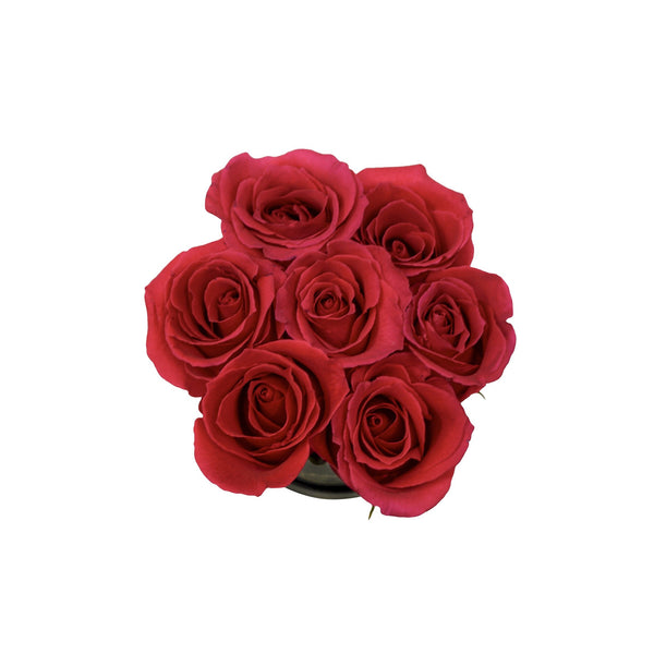 Red Roses in Mini Box - The Love Box Flowers