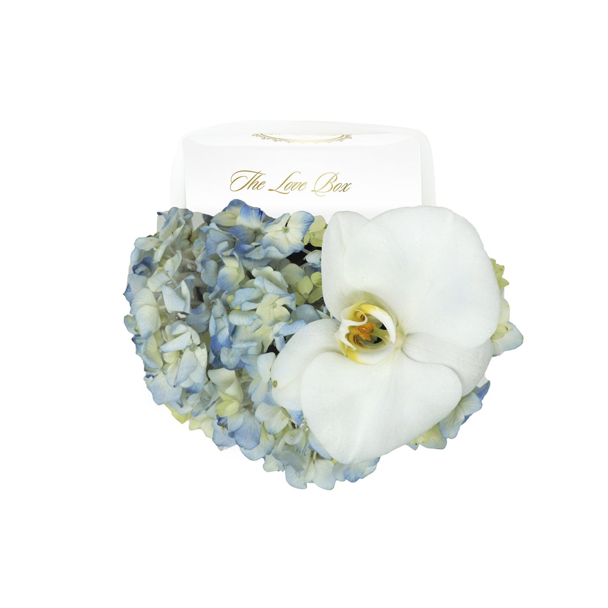 Blue Hydrangea and Orchid Flower in Mini Box - The Love Box Flowers