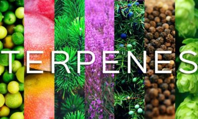 Breaking Down Our Terpene Profiles