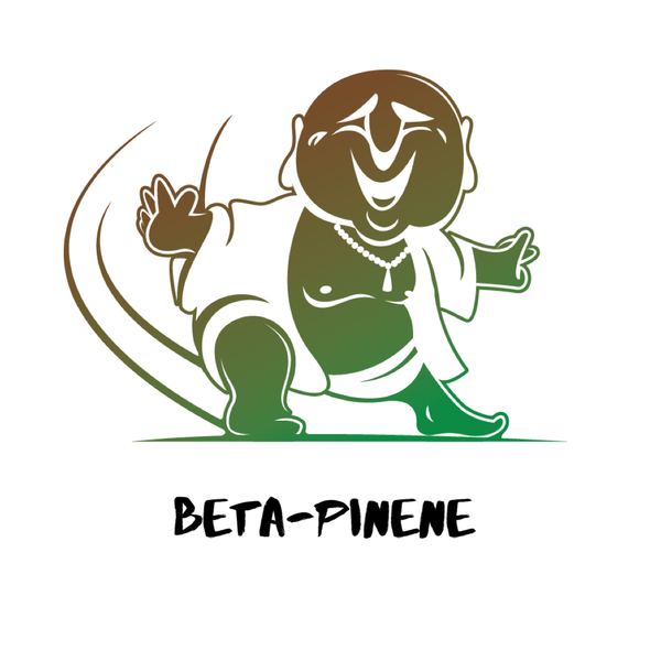 Beta-Pinene Terpene Isolate 2ml