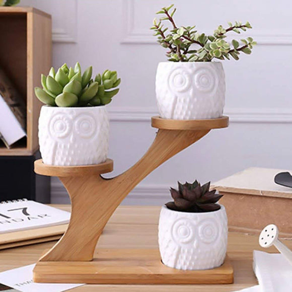 Owl Desk Plants w/ Bamboo Stand