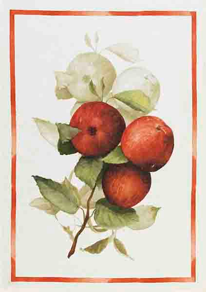 Apples Linen Tea Towel
