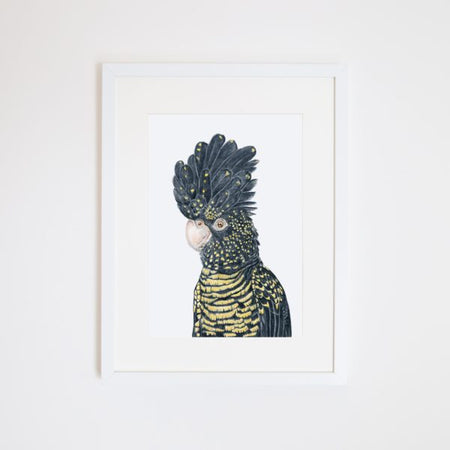 Lily the Red Tailed Black Cockatoo A4 Print