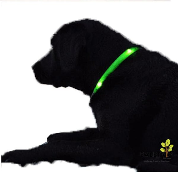 Led Dog Collar - Assorted Colors And Sizes - Pets - Free Shipping