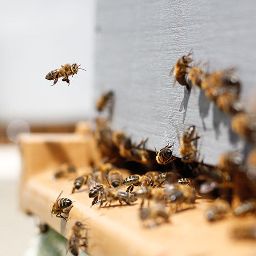 As the Weather Cools, the Hive Heats Up