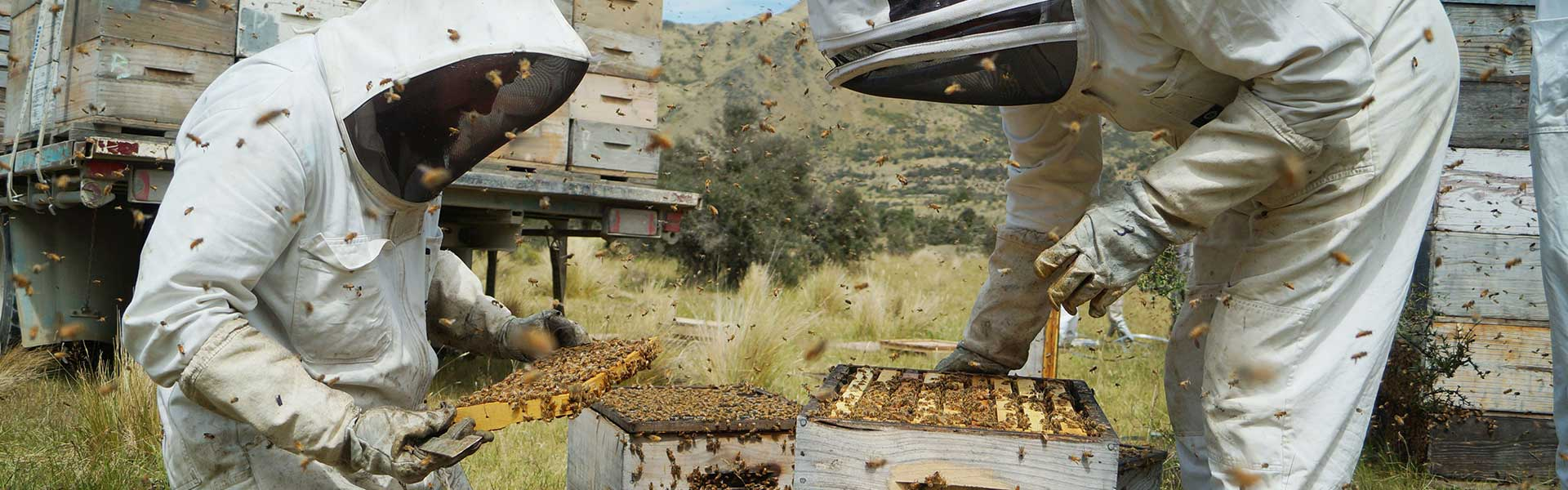 beekeepers manuka honey