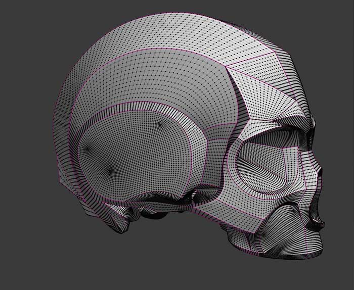 3d modelling and polygon modeling of a skull model for digital artists