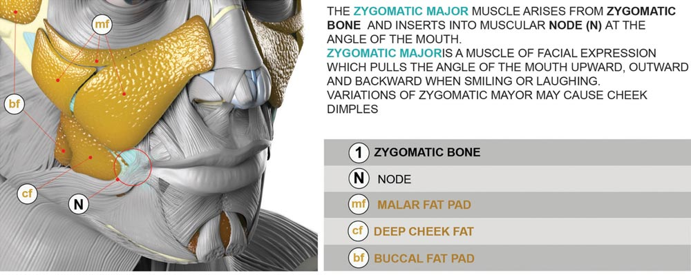 Zygomatic major muscle group description and system coding for VFX and CGI artists