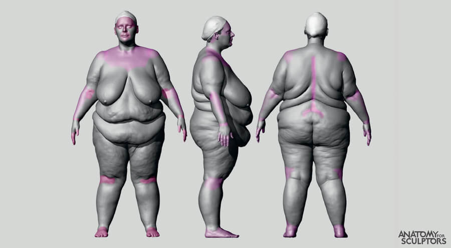 bodies less places that are less affected by body fat anatomy for artists