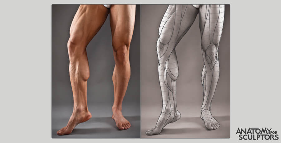 male leg shape and forms by anatomy for sculptors