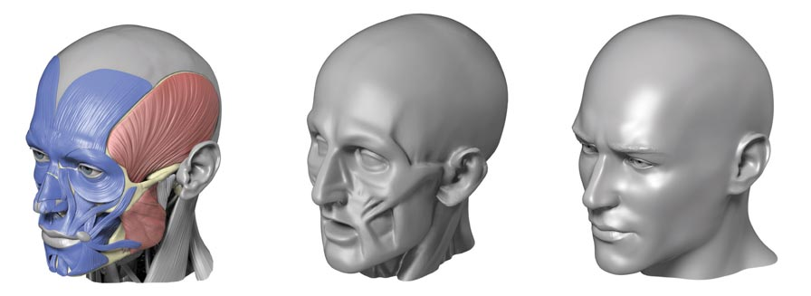 3D Modelling renders of human male head for artists