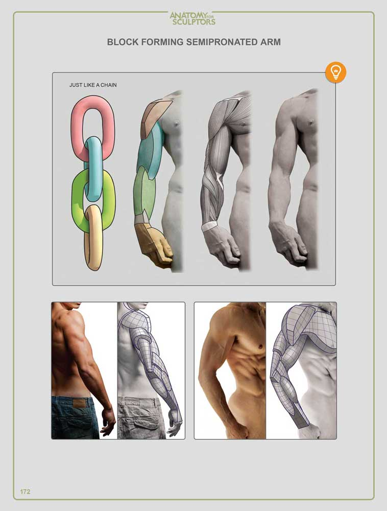 Anatomy For Sculptors: Understanding the Human Figure - Hardcover