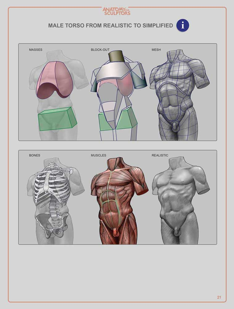 Anatomy For Sculptors: Understanding the Human Figure - Paperback (English)