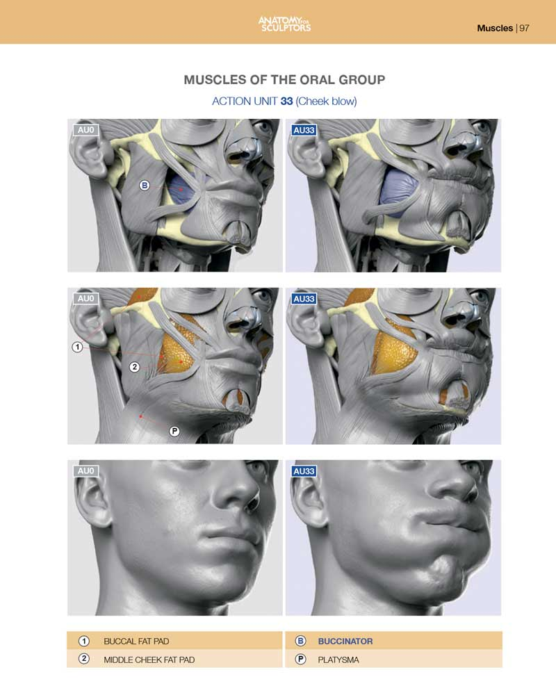 Anatomy of Facial Expression - Hardcover (English)