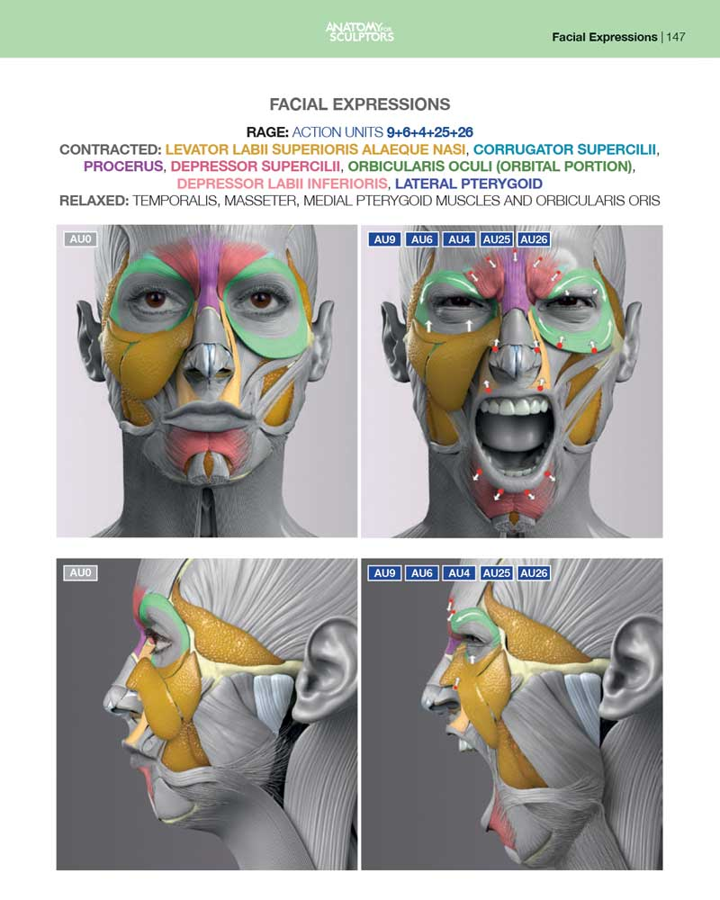 Anatomy of Facial Expression - Paperback