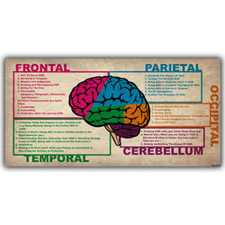 Human Brain Diagram Lobes Medical Knowledge Silk Poster Printing