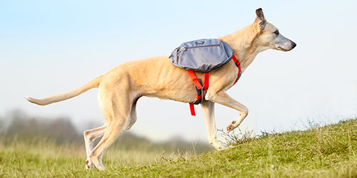 Get In Touch / iEnergy Dog Backpacks