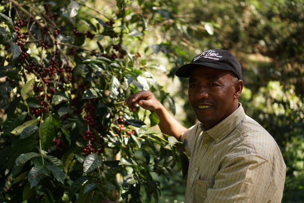 Flavour of The Month: Tesfaye by PPP Coffee