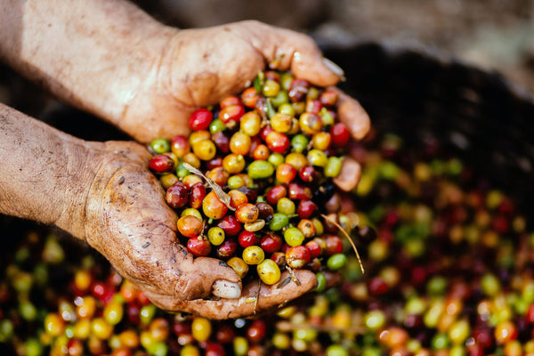 Know Your Coffee: Coffee Processing 101