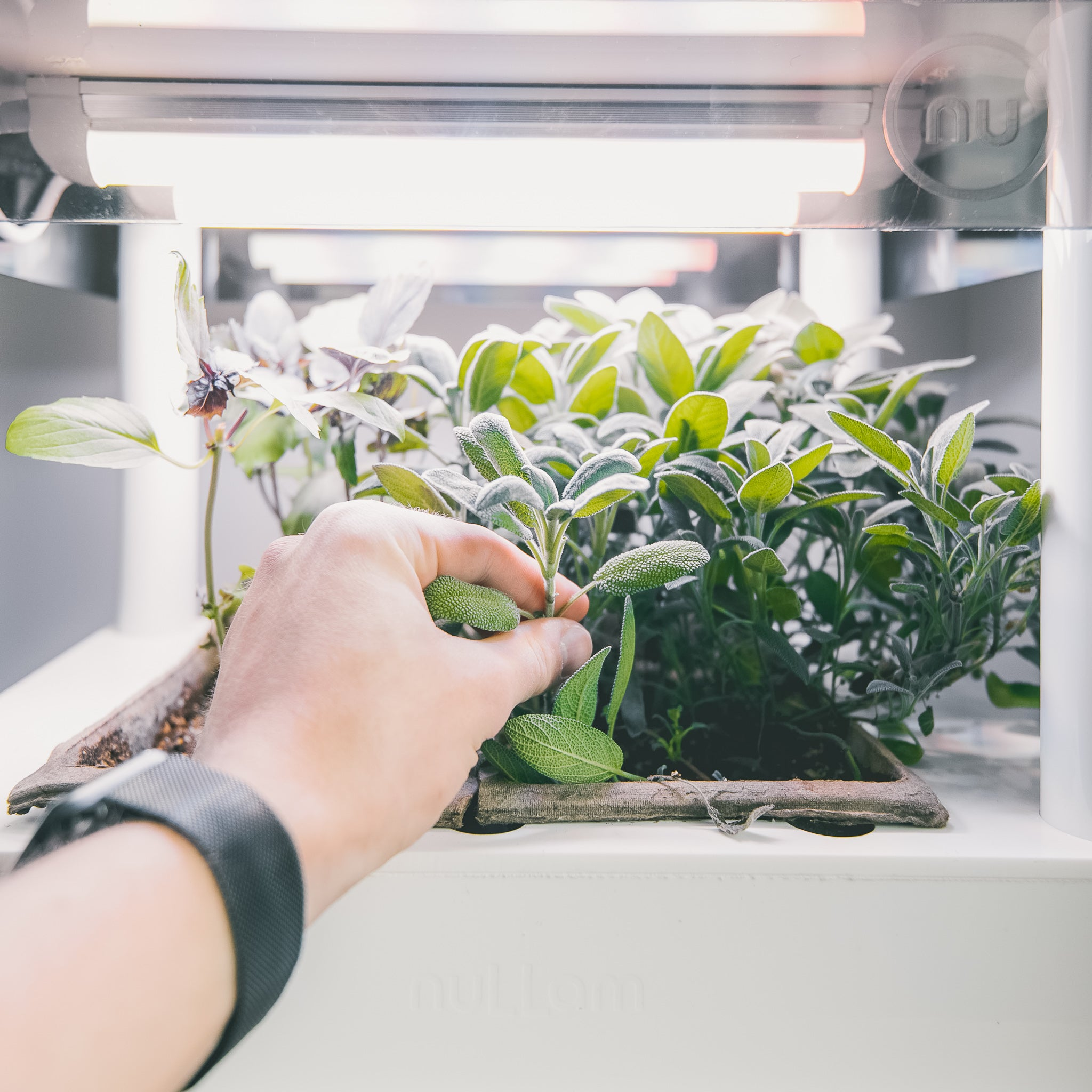Indoor Gardening - Future is here!