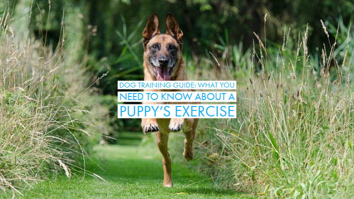 Dog Training Guide: What You Need To Know About A Puppy's Exercise
