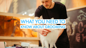 Dog Training Tips and Tricks: What You Need To Know About Grooming