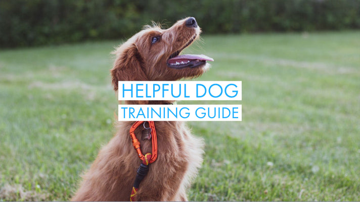 Effectively Deal With Your Puppy's Behaviour With This Helpful Dog Training Guide