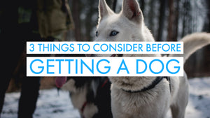 Dog Training Guide: 3 Things To Consider Before Getting A Dog