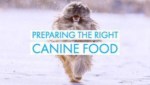 Dog Training Tips: Preparing The Right Canine Food