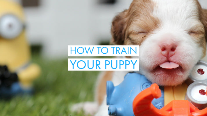 Woof or Wuff | Dog Training for Good Dog Manners