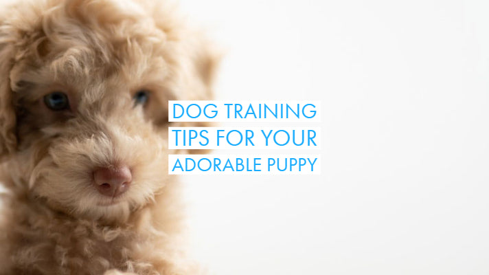 Dog Training Tips for Your Adorable Puppy