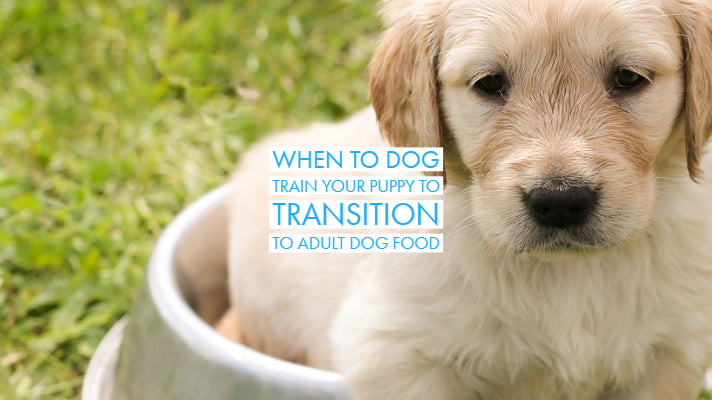 When to Dog Train Your Puppy to Transition to Adult Dog Food