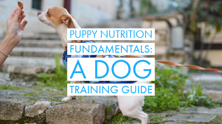 Puppy Feeding and Nutrition Fundamentals: A Dog Training Guide