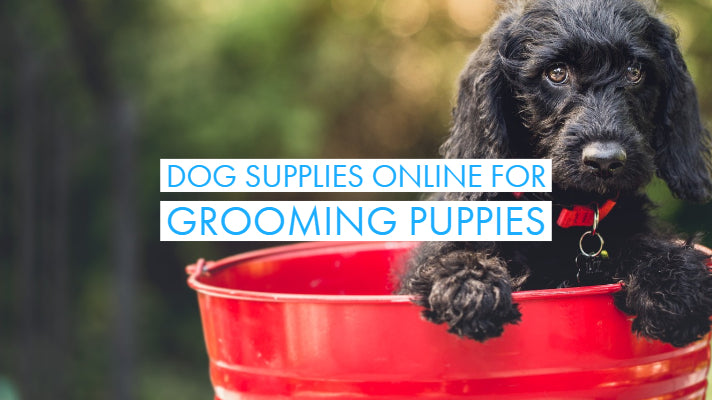 Dog Supplies Online For Grooming Puppies