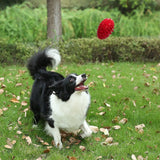 Durable Rubber Chew Dog Treat Toy,Pro Goleem Indestructible Dinosaur Egg For Puppy/Small/Medium Dogs, Red, WooforWuff