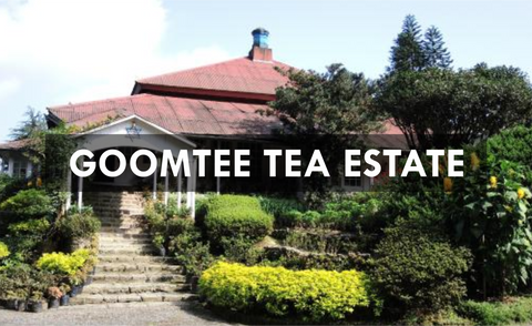 Goomtee Tea Estate