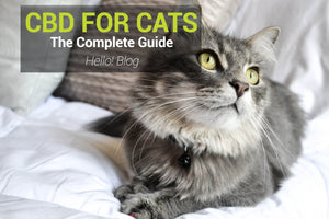 CBD Oil For Your Cats