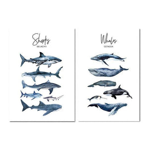 Whale Shark Canvas Poster - yeshark