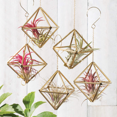 """Diamond"" Himmeli ornaments shown with air plants"