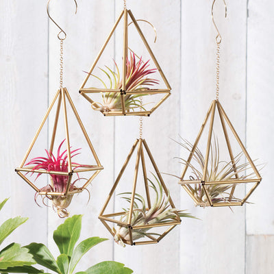 "Himmeli ""Basket"" ornaments shown holding air plants"