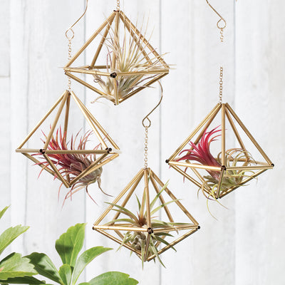 Himmeli Decahedron ornaments shown with air plants