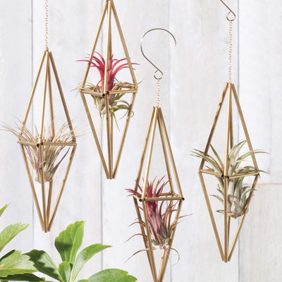 Himmeli Tall Diamond ornaments shown with air plants