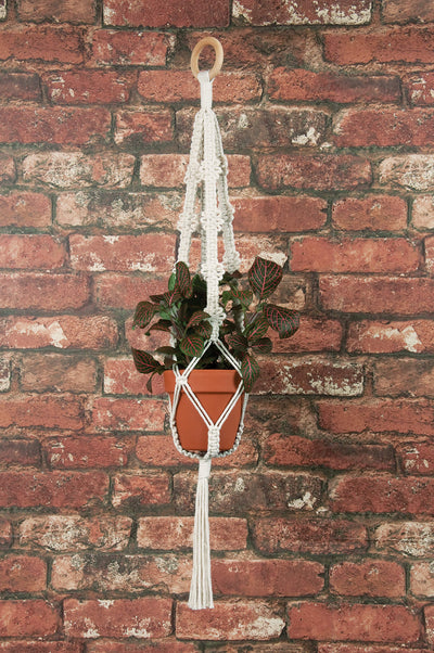 Solid Oak Macrame plant hanger kit shown on brick wall