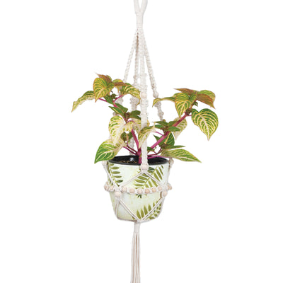 Solid Oak large beaded macrame plant hanger kit