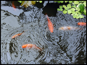 Fish Kills In Ponds Or Small Lakes