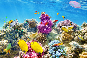 3D Coral, Fish Underwater Nature Wallpaper