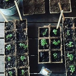 HERB GARDEN SEEDLINGS - FOR AGES 4-8