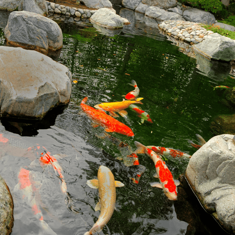 Hydroseal for koi ponds and swimming pools