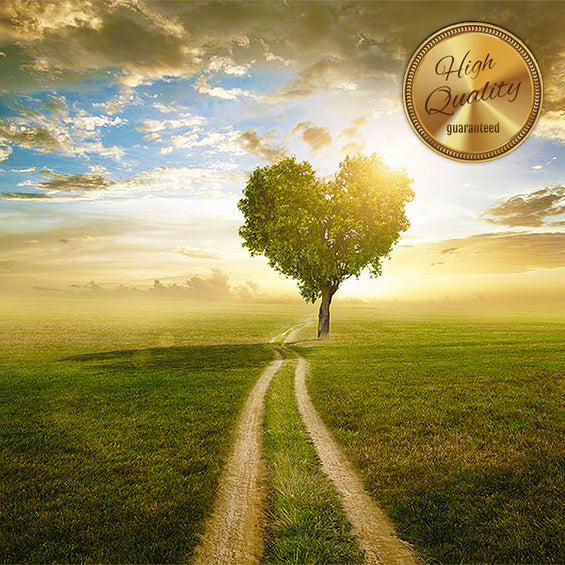 Once Upon a Vision Kit—SILVER