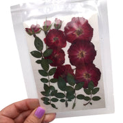 Large Pressed Dry Flowers, Dried Flat Flower Packs, Pressed Flowers For Resin Crafts